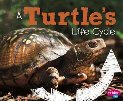 A Turtle's Life Cycle - Dunn, Mary R
