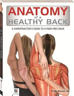 Anatomy of a Healthy Back -