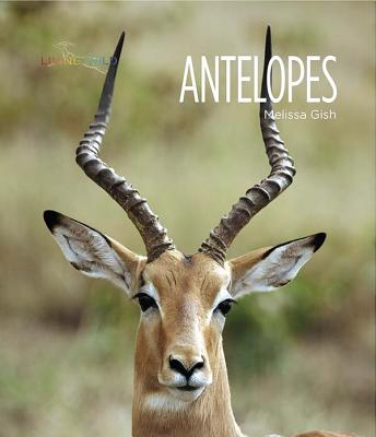 Antelopes - Gish, Melissa