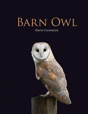 Barn Owl - Chandler, David