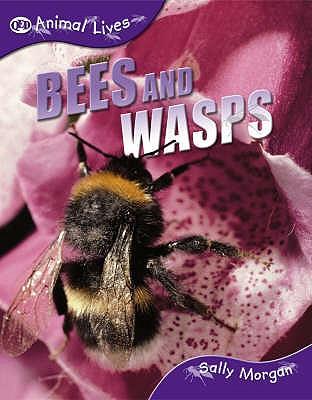Bees and Wasps - Morgan, Sally