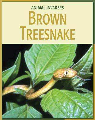 Brown Treesnake - Somervill, Barbara A