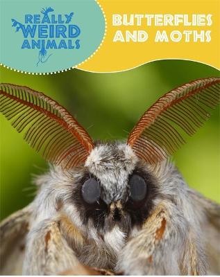 Butterflies and Moths - Hibbert, Clare