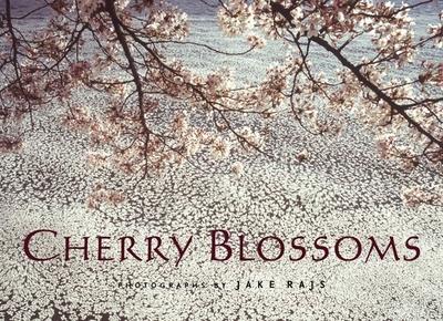 Cherry Blossoms - Rajs, Jake (Photographer)