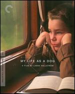 My Life as a Dog [Criterion Collection] [Blu-ray] - Lasse Hallstr�m