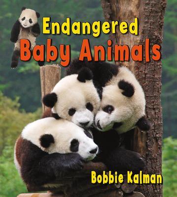 Endangered Baby Animals - Kalman, Bobbie