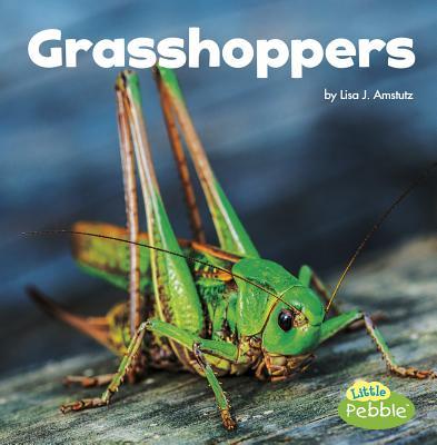 Grasshoppers - Amstutz, Lisa J