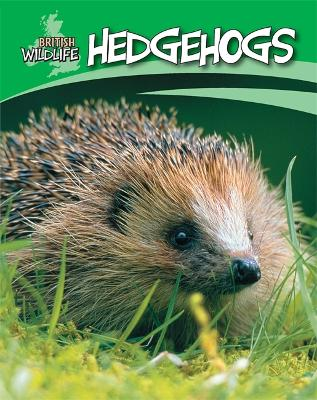 Hedgehogs - Morgan, Sally