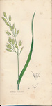 The Grasses of Great Britain [Parts XXII & XXIII Only], Illustrated By John Sowerby. Described, With Observations on Their Natural History and Uses