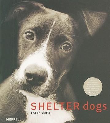 Shelter Dogs - Scott, Traer
