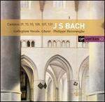 J.S. Bach: Cantatas 39, 73, 93, 105, 107, 131