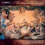 J.S. Bach: Secular Cantatas, Vol. 10 - Cantatas of Contentment - BWV 204, BWV 30a