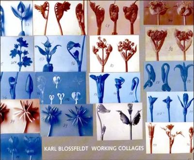 Karl Blossfeldt: Working Collages - Wilde, Ann (Editor), and Wilde, Jurgen (Editor), and Blossfeldt, Karl