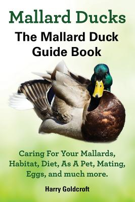 Mallard Ducks - Goldcroft, Harry