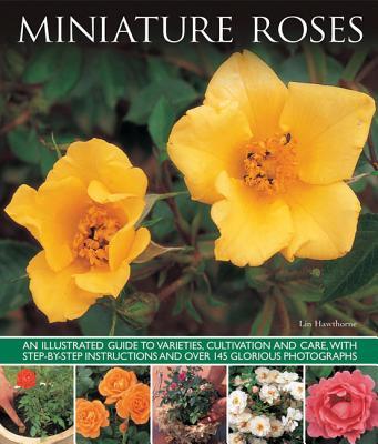 Miniature Roses - Hawthorne, Lin