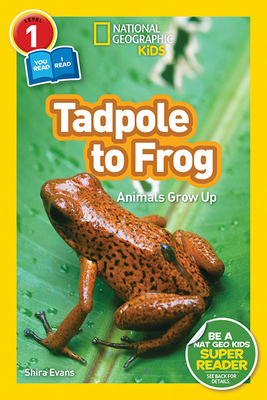 National Geographic Readers: Tadpole to Frog (L1/Co-Reader) - Evans, Shira