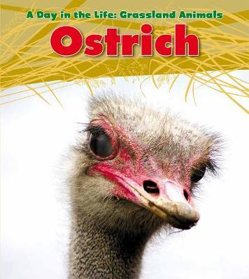 Ostrich - Spilsbury, Louise