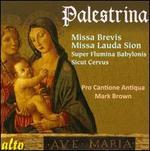 Palestrina: Missa Brevis; Missa Lauda Sion
