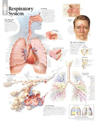 Respiratory System - Scientific Publishing