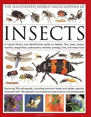 The Illustrated World Encyclopedia of Insects: A Natural History and Identification Guide to Beetles, Flies, Bees, Wasps, Mayflies, Dragonflies, Cockroaches, Mantids, Earwigs, Ants and Many More - Walters, Martin