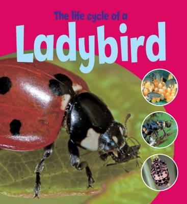 The Life Cycle of a Ladybird - Thomson, Ruth