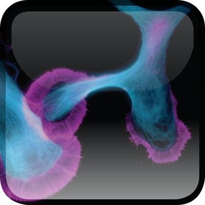 The Neuron: Cell and Molecular Biology - Levitan, Irwin B, Ph.D.