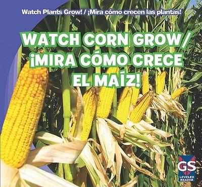Watch Corn Grow!/Mira Como Crece El Maiz! - Rajczak, Kristen, and Alaman, Eduardo (Translated by)
