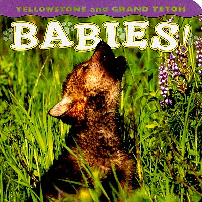 Yellowstone and Grand Teton Babies! - Shattil, Wendy (Photographer), and Rozinski, Bob (Photographer)